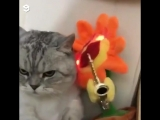 Коты и танцующий цветок