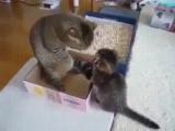 У мамы так просто коробку не отвоюешь)))))