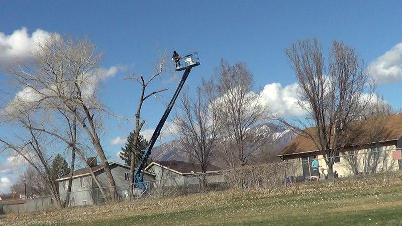 Как в Америке пилят деревья в частном секторе Дело одного человека