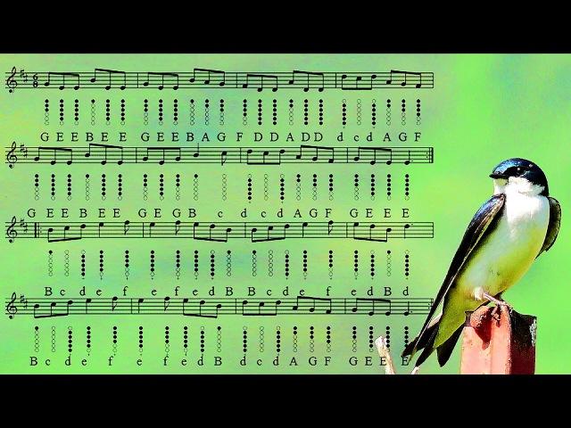 Swallowtail Jig - Tin Whistle Tabs - Play Along Tutorial