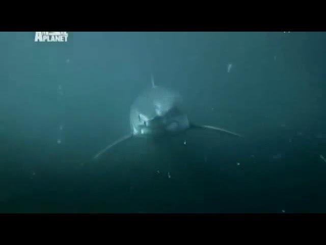 Акулы. Sharks