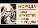 Борода богатство Рода