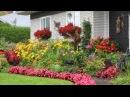 My mom's flower garden - Le jardin de ma mere