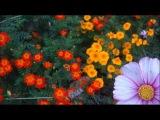 A. Vivaldi (Joseph Meck) RV 338 Concerto for violin, strings &amp b.c. in A major Florian Deuter