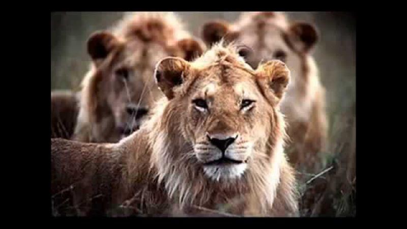 Os 3 leões - Narrado - Profunda Reflexão