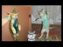 Смешные кошки Приколы про кошек и котов 2018 7 Очень смешные приколы до слез - Старенькие