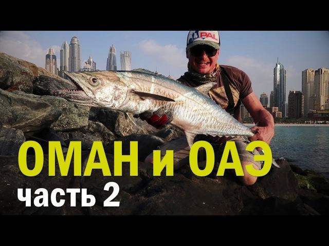 Не думал, что среди небоскребов клюют такие монстры! Рыболовное приключение в Омане и ОАЭ. ч.2