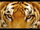 Ricky Kej Shanti GRAMMY® WINNER Amitabh Bachchan