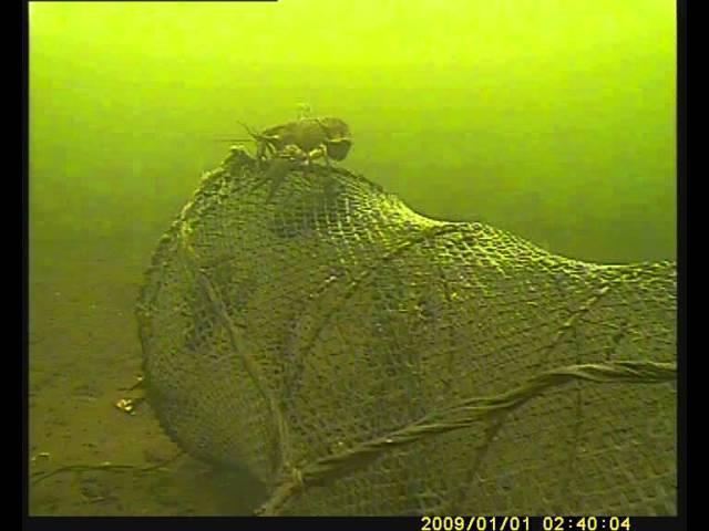подводная камера онлайн( рак на буче ccd )