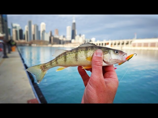 Urban Fishing Frenzy in Downtown Chicago