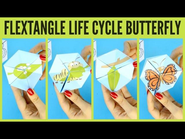 Флексагон Жизненный цикл бабочки