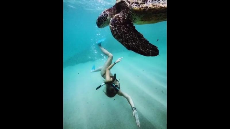 Прогулка под водой - Т.А. Ривьера - 8 920 688 08 71