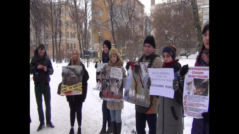 На зоозащитном митинге в Петербурге.