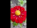 Цветок Хорошего настроения