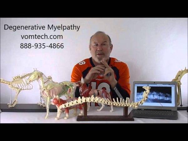 Дегенеративная миелопатия у собак мануальная и лазеротерапия Degenerative Myelopathy in the Dog