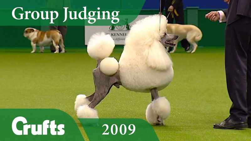 Standard Poodle wins Utility Group Judging at Crufts 2009 Crufts Classics