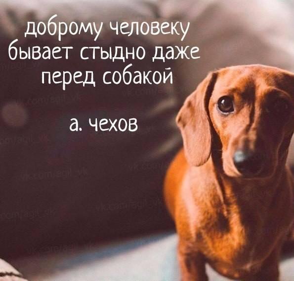 https://pp.userapi.com/c840430/v840430248/42e36/xdgYxFNRm28.jpg