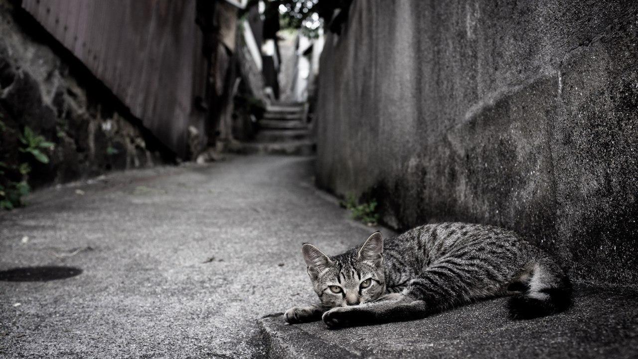 Американский город потопает в кошачьей моче