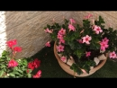 Всем друзьям большой цветочный привет из Иерусалима. 21 мая 2018