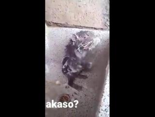 У Палыча банный день сегодня