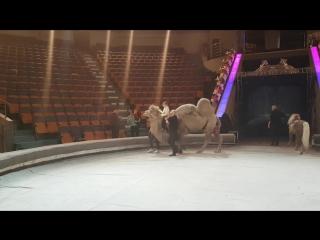 Катаюсь на верблюде