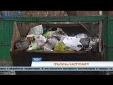 В Перми будут проводить парковые забеги