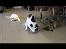 Новая когтеточка с мятой у котишек, котокафе X-CAT , г. Петрозаводск, пр. Ленина, д.3