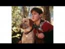 X/ф - Далеко от дома Приключения Жёлтого пса приключения, семейный.