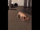 Хочу такую собаку Кот уже есть