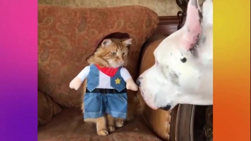 Подборка - смешные сценки из мира животных