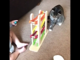 Котики и малыши!!! Так мило