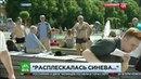 Ничего не понимаю! Колобок Ярославкин избил корреспондента НТВ в прямом эфире