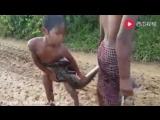 Мальчишки ловят змей.