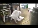 Кот моет полы и ругается