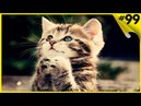 Милота! 5 минут видео с милыми котятами, котиками и кошечками