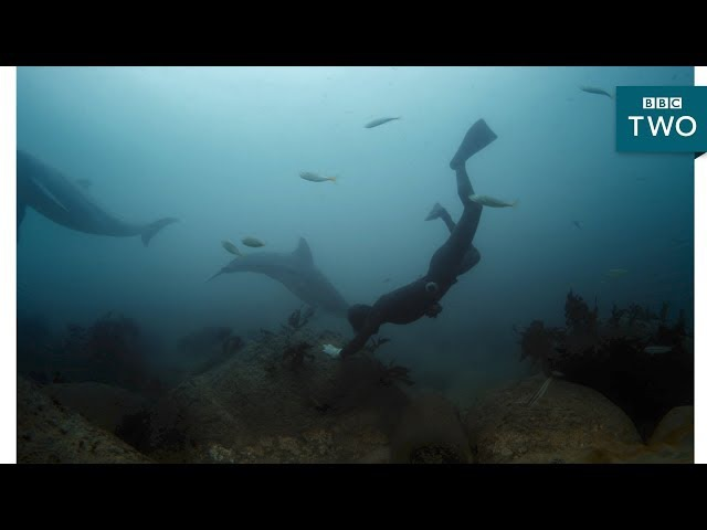 Bottlenose dolphins encounter a Haenyeo diver South Korea Earth's Hidden Wilderness BBC Two