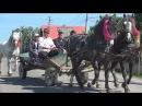 Targul de cai de la Marginea, Suceava 28.05.2017