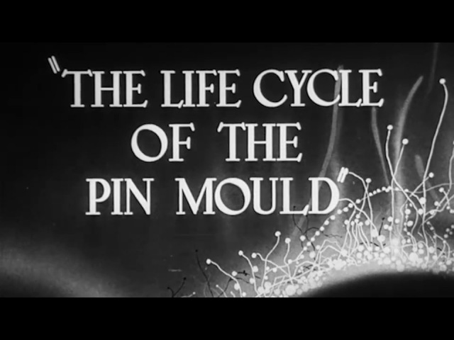 The Life Cycle Of The Pin Mould - 1943 Educational Documentary - WDTVLIVE42
