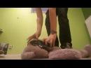 Teen boy trample big bear