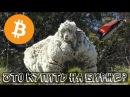 КОГО ПОБРЕЮТ на крипторынке? Купить альты или держать BitCoin (btc)? Криптовалюты Stratis,