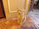 кот в шоке от человеческого детёныша