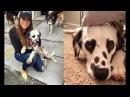Пёс признается в любви хозяйке без слов ей просто достаточно взглянуть на его глаза