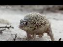 Vitas Frog · coub, коуб
