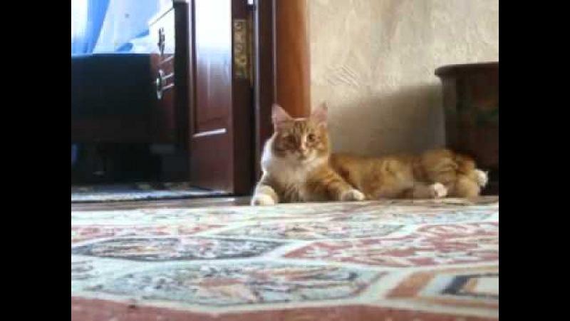 Кот ушёл - Cat gone
