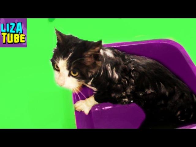 Грязнуля Мистер Кэт 😼 Что случилось с нашим котом 💦 Купаем котика