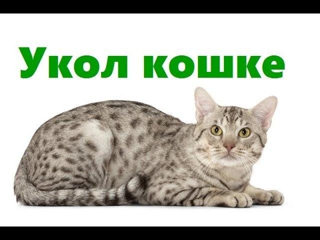 Укол кошке. Ветеринарная клиника Био-Вет.