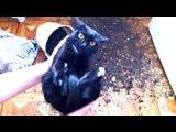 Приколы с кошками и котами #13. Подборка смешных и интересных видео с котиками и к ...