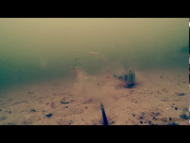 Реакция Окуня на Малька! Рыбалка и Подводная съемка Атака на Живца!