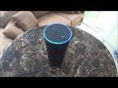 США Alexa Amazon Echo Я, две Кошки и Алекса 4 женщины в доме!