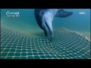 Le remise en liberté de Taeshan et Boksun, 2 dauphins captifs en 2015